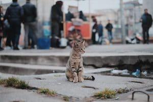 Kitten in city